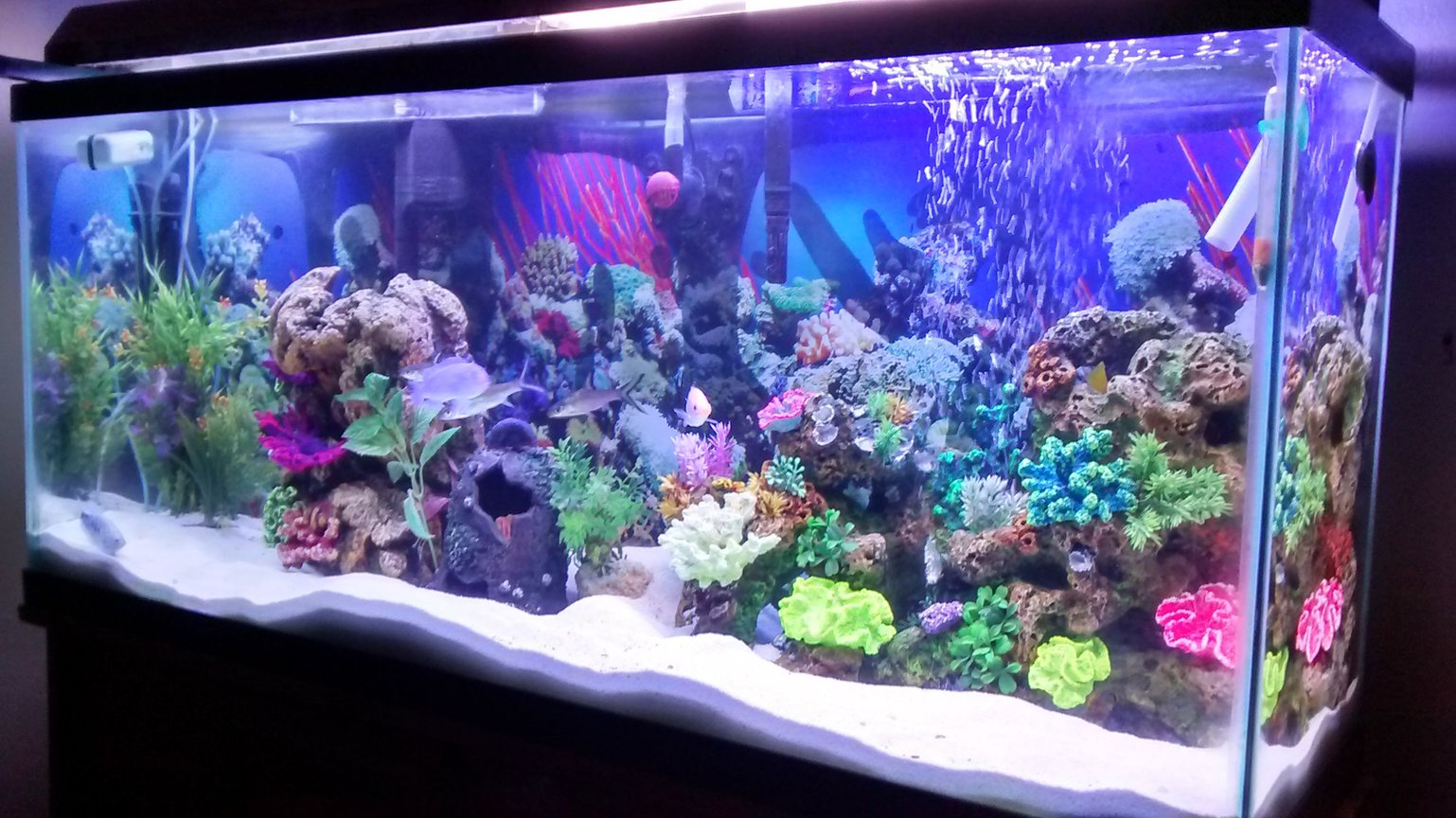 55 gallons freshwater fish tank (mostly fish and non-living decorations) - My first tank ever owned its freshwater despise the salt tank look.