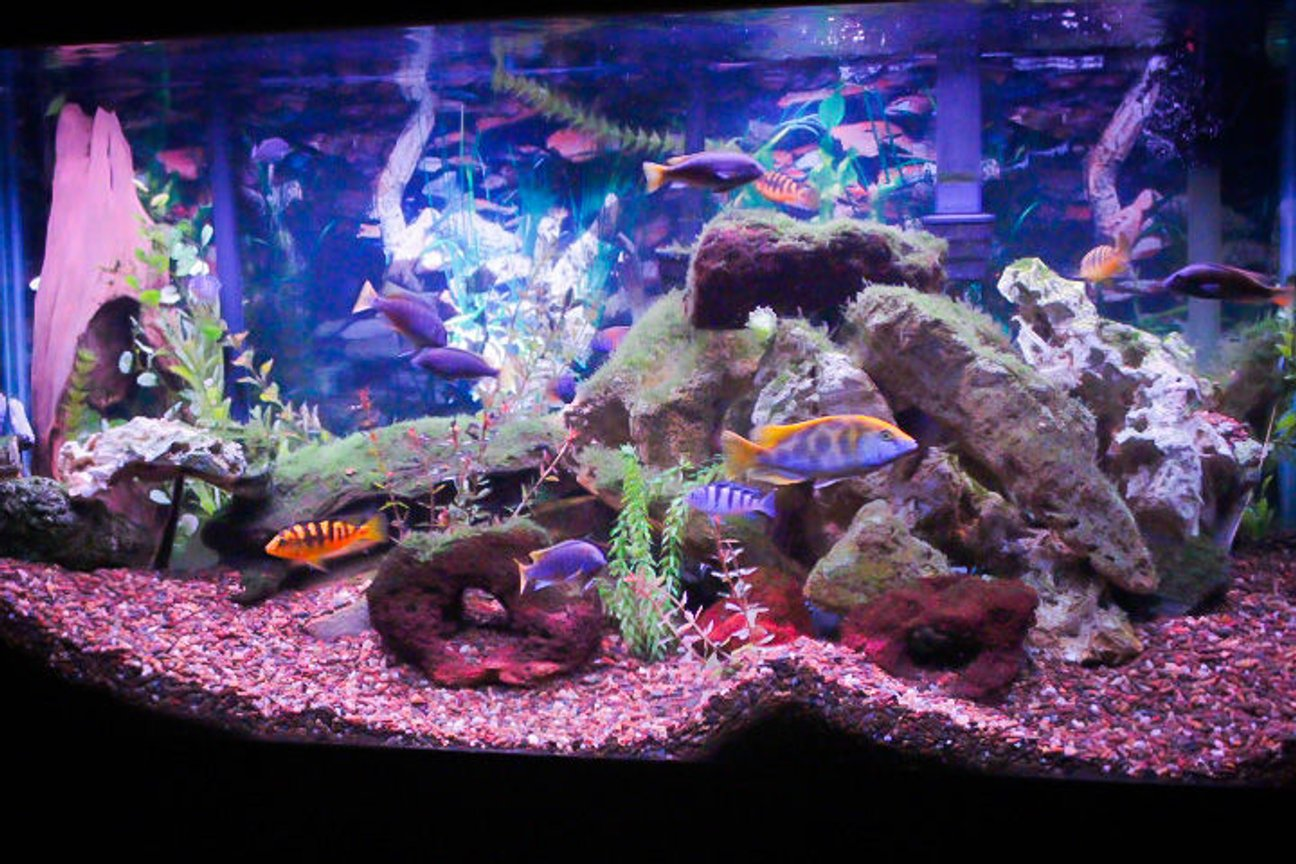 90 gallons freshwater fish tank (mostly fish and non-living decorations) - 90 gallon African tank.