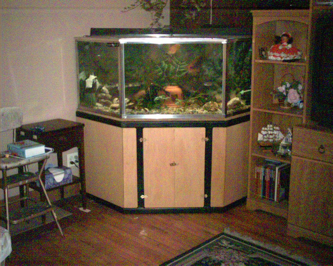 125 gallons freshwater fish tank (mostly fish and non-living decorations) - custom built tank