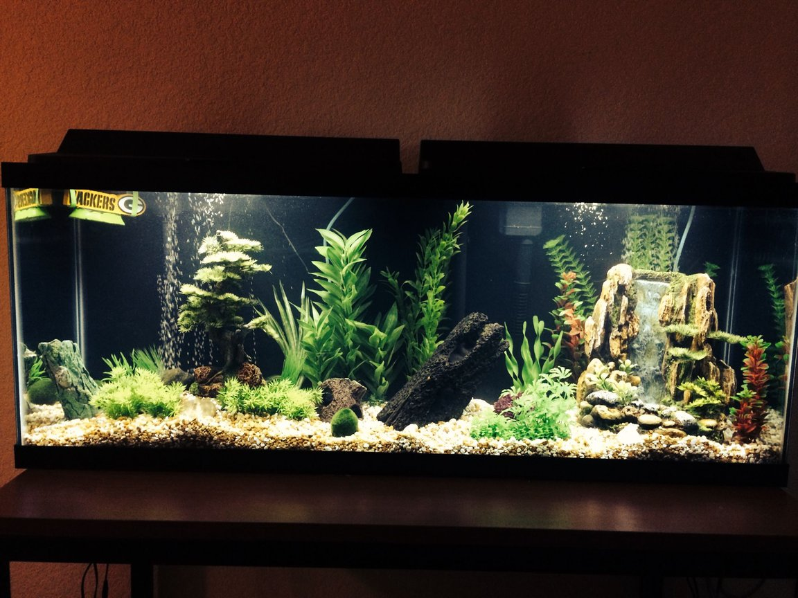 50 gallons freshwater fish tank (mostly fish and non-living decorations) - 50 gallon freshwater tank