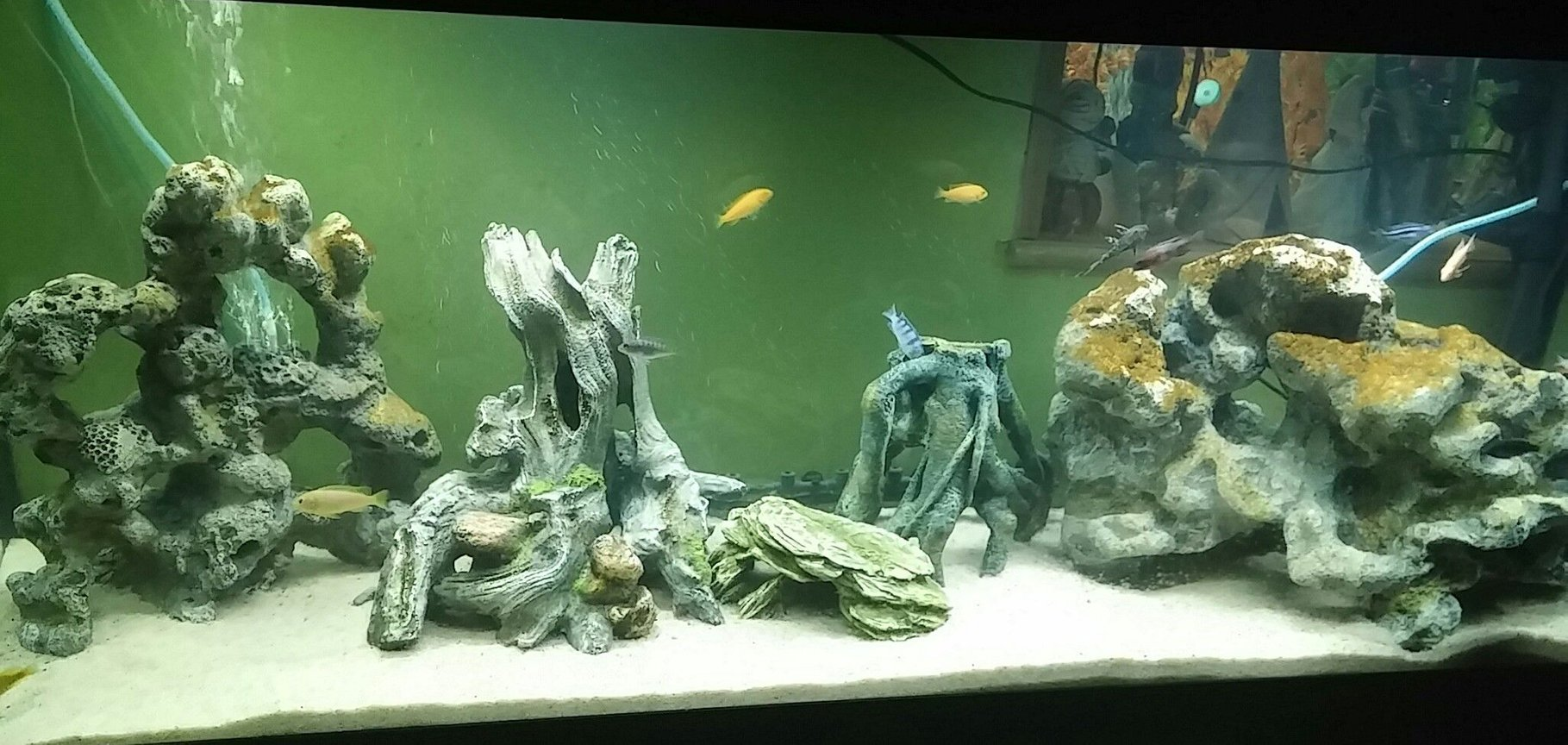 150 gallons freshwater fish tank (mostly fish and non-living decorations) - 55 gallon cichlid tank