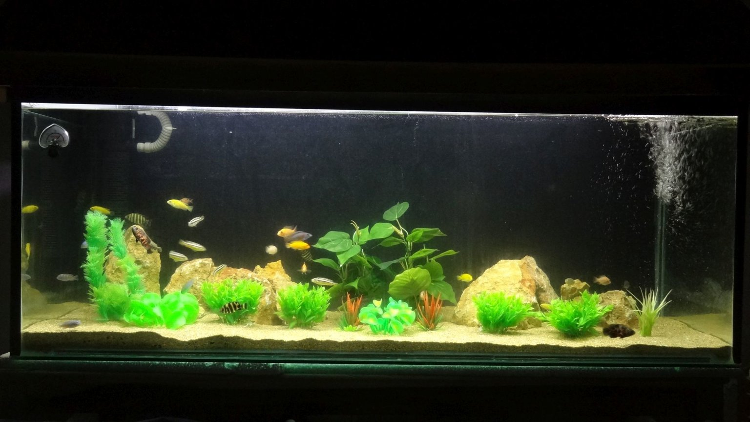 120 gallons freshwater fish tank (mostly fish and non-living decorations) - 60 inch long, 18 inch wide, 24 inch hight, sump filtration and submersible filtration, sea sand, rocks