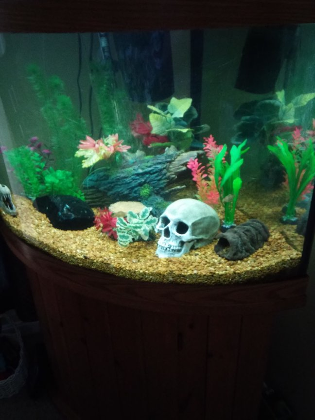 55 gallons freshwater fish tank (mostly fish and non-living decorations) - 55 gallon bow front freshwater