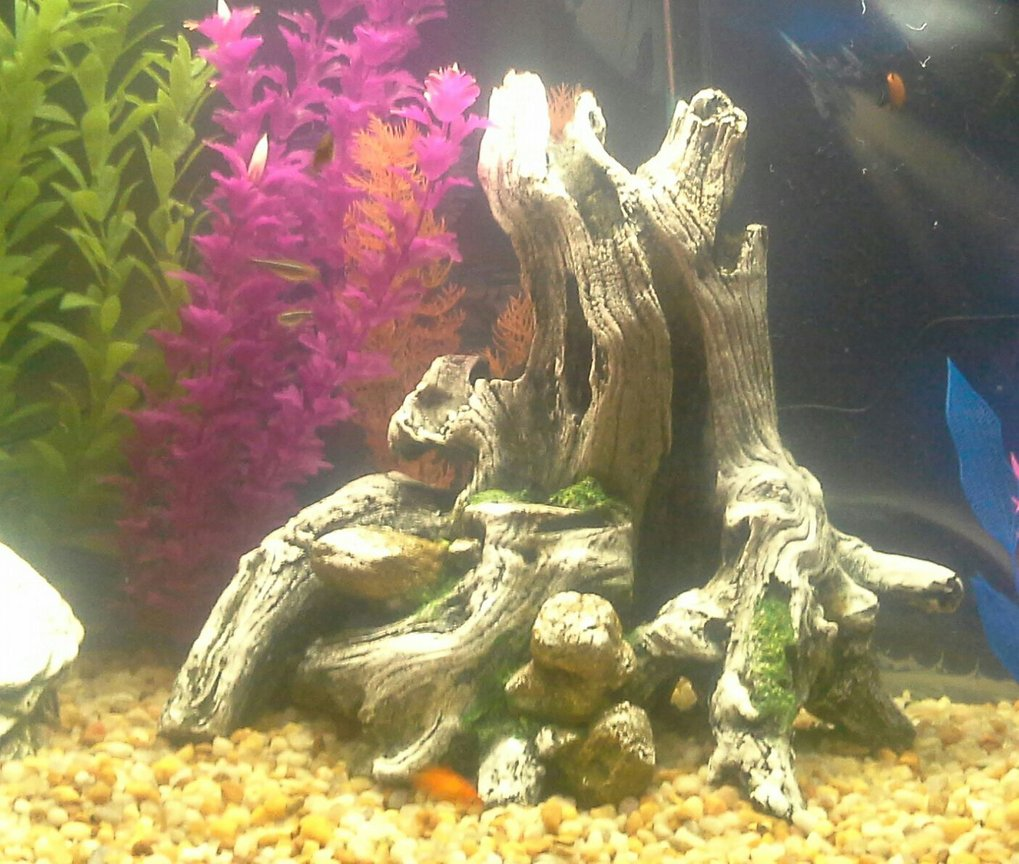 30 gallons freshwater fish tank (mostly fish and non-living decorations) - Using equipment I got back in 2007. I am continually upgrading now that I am getting back into it.
