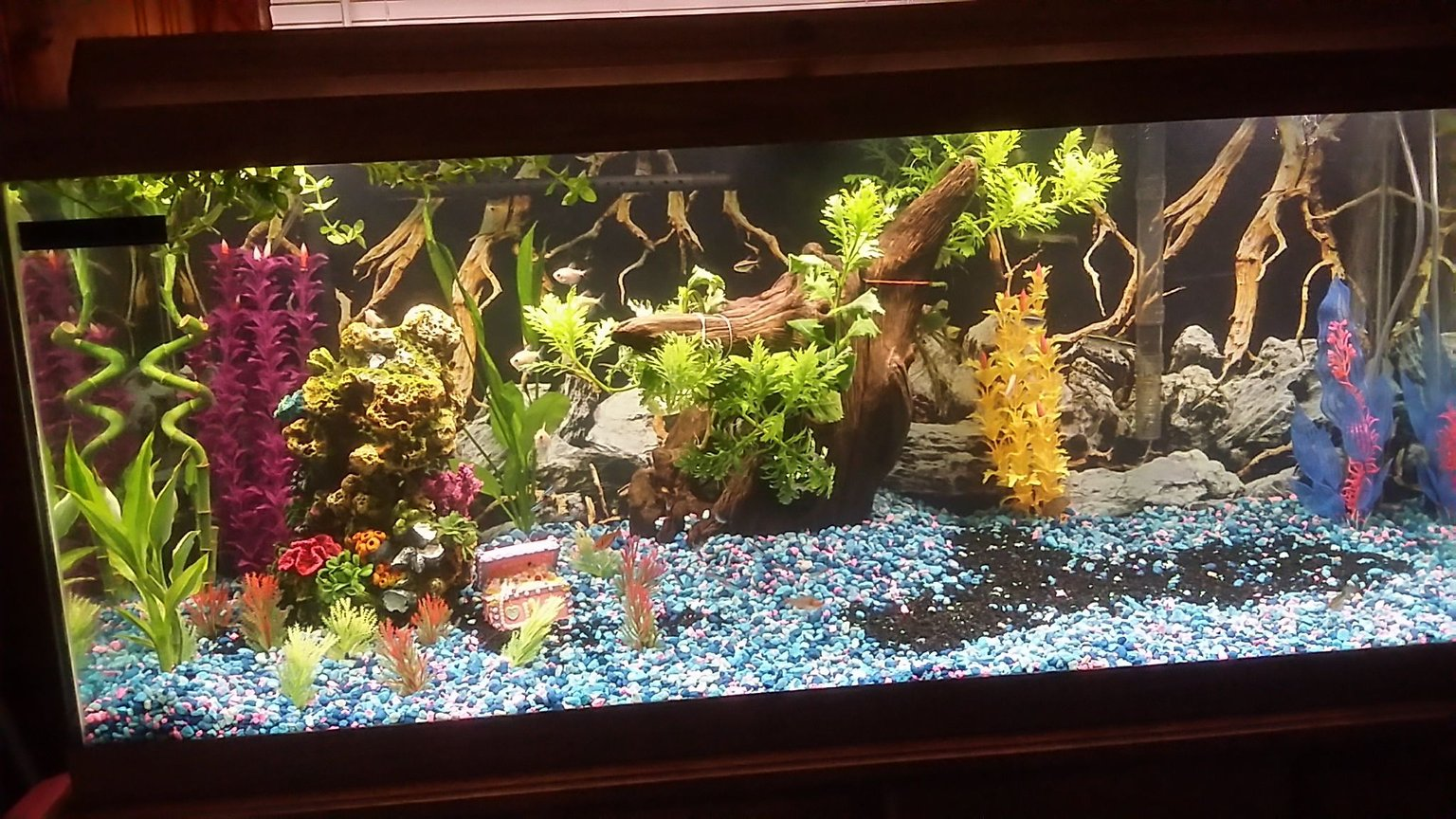 75 gallons freshwater fish tank (mostly fish and non-living decorations) - Work in progress, building custom princess castle with the family.