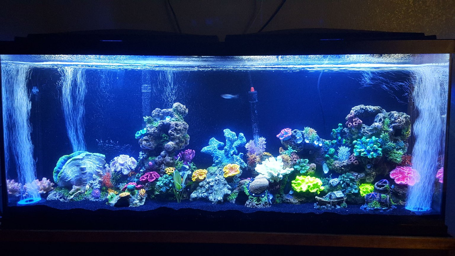 55 gallons freshwater fish tank (mostly fish and non-living decorations) - My lil project :)