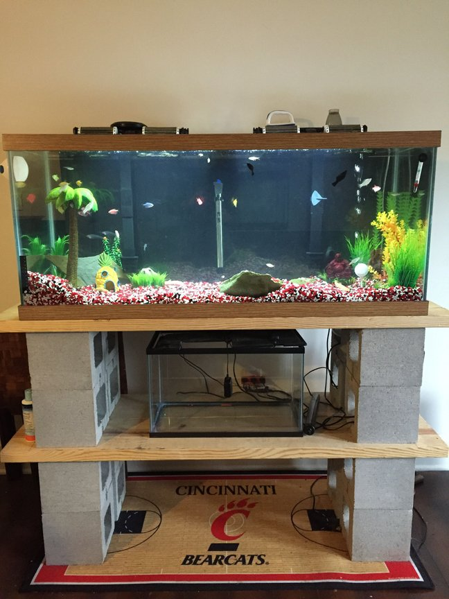 75 gallons freshwater fish tank (mostly fish and non-living decorations) - 75g Tank & Custom Stand!