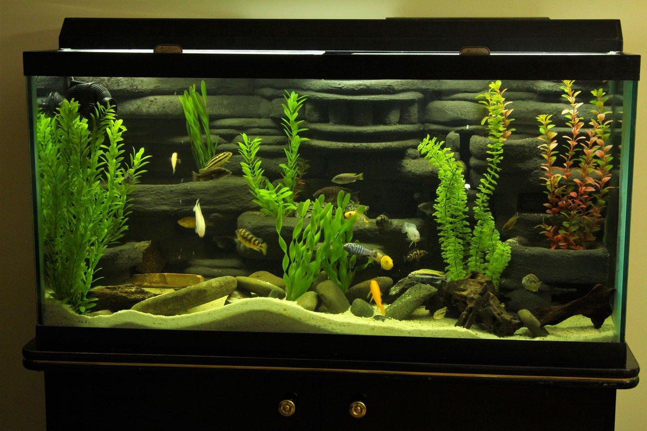 Unduh 94 Background Aquarium Diy HD Terbaru