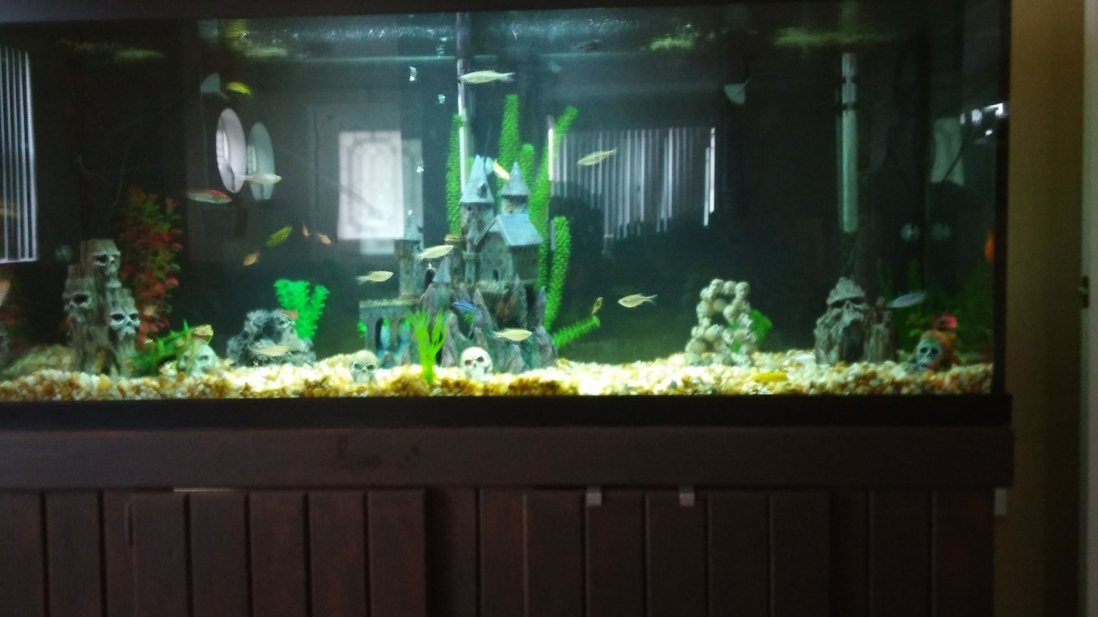 125 gallons freshwater fish tank (mostly fish and non-living decorations) - Assorted african cichlids