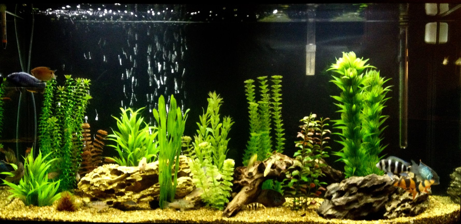 60 gallons freshwater fish tank (mostly fish and non-living decorations) - 60 gallon mixed