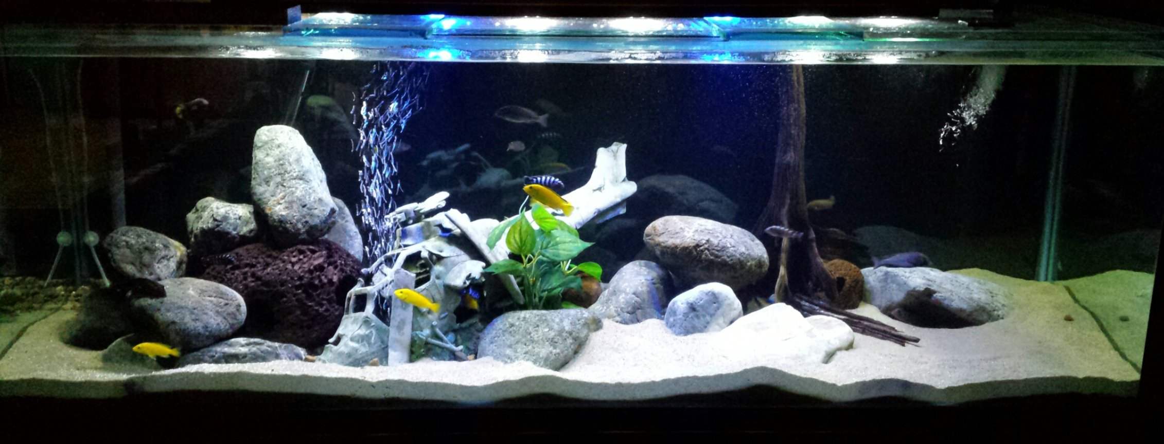 170 gallons freshwater fish tank (mostly fish and non-living decorations) - 6ft x 2ft x 2ft Lake Malawi tank 'Black Hawk Down'