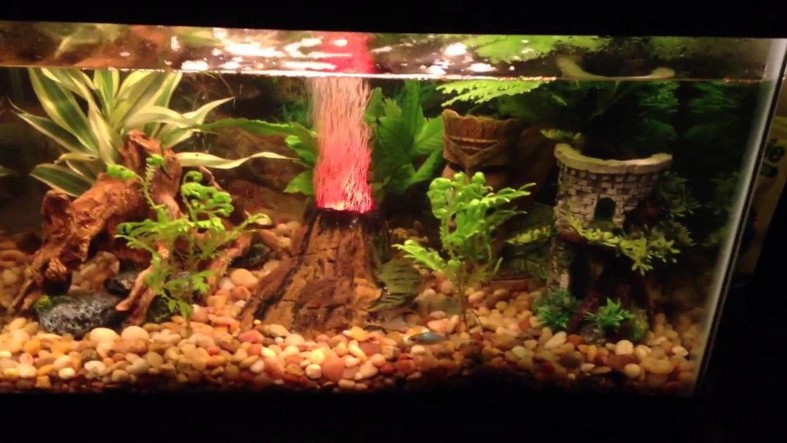 10 gallons freshwater fish tank (mostly fish and non-living decorations) - This is mine