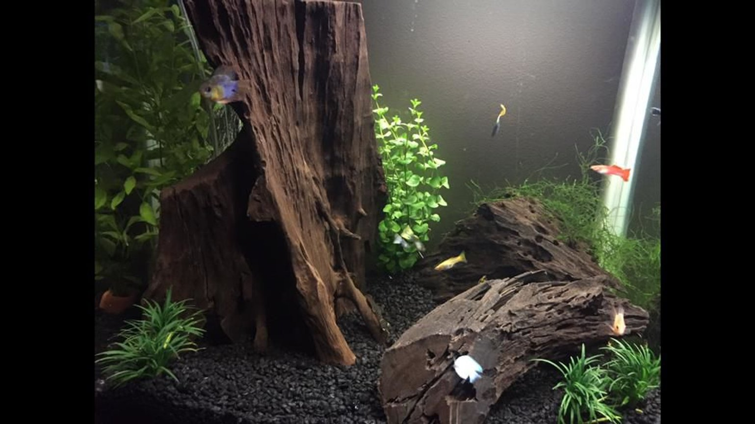35 gallons freshwater fish tank (mostly fish and non-living decorations) - Love these guys, hope you enjoy my tank as much as me! :)