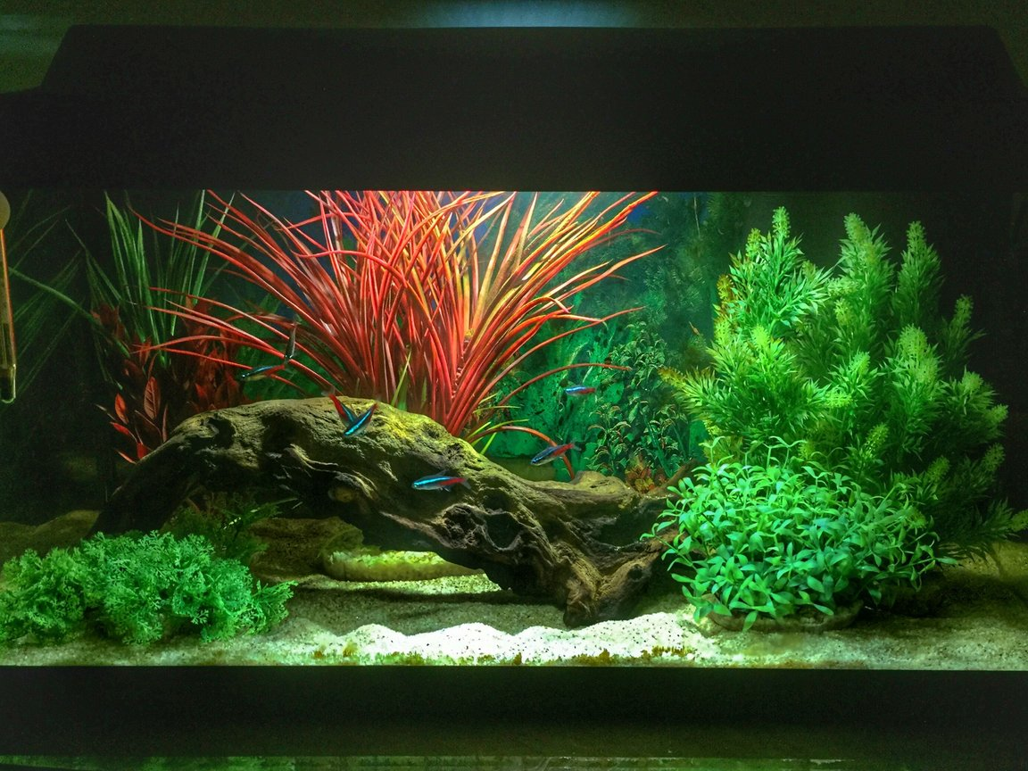 14 gallons freshwater fish tank (mostly fish and non-living decorations) - First tank. Set up for my boys, but I already have an unhealthy obsession....