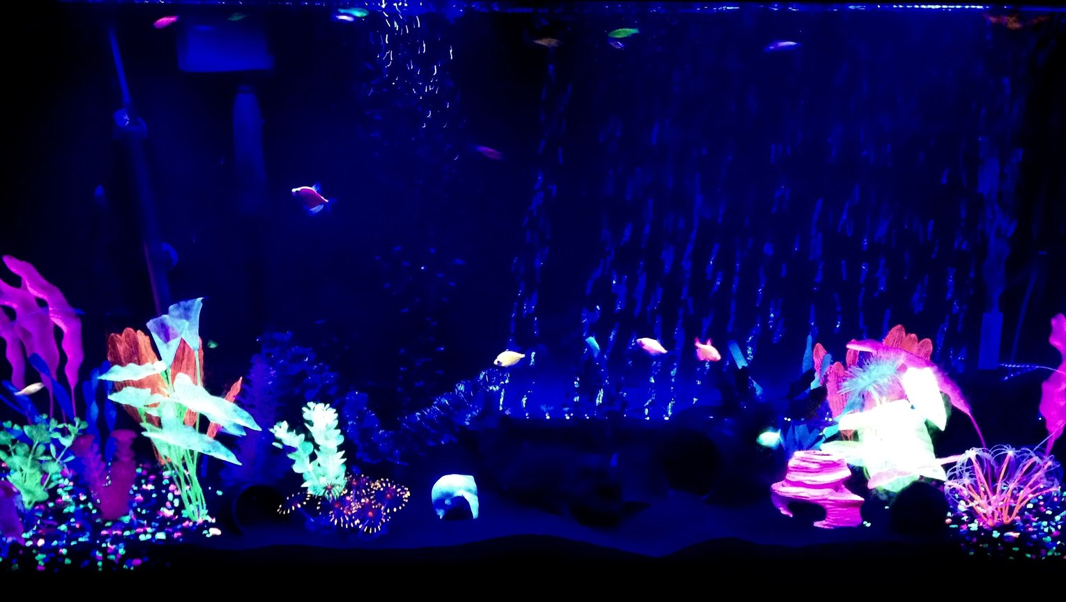 60 gallons freshwater fish tank (mostly fish and non-living decorations) - 60g freshwater Glofish tank with Glofish danios, Glofish tetras and albino Cory cats.