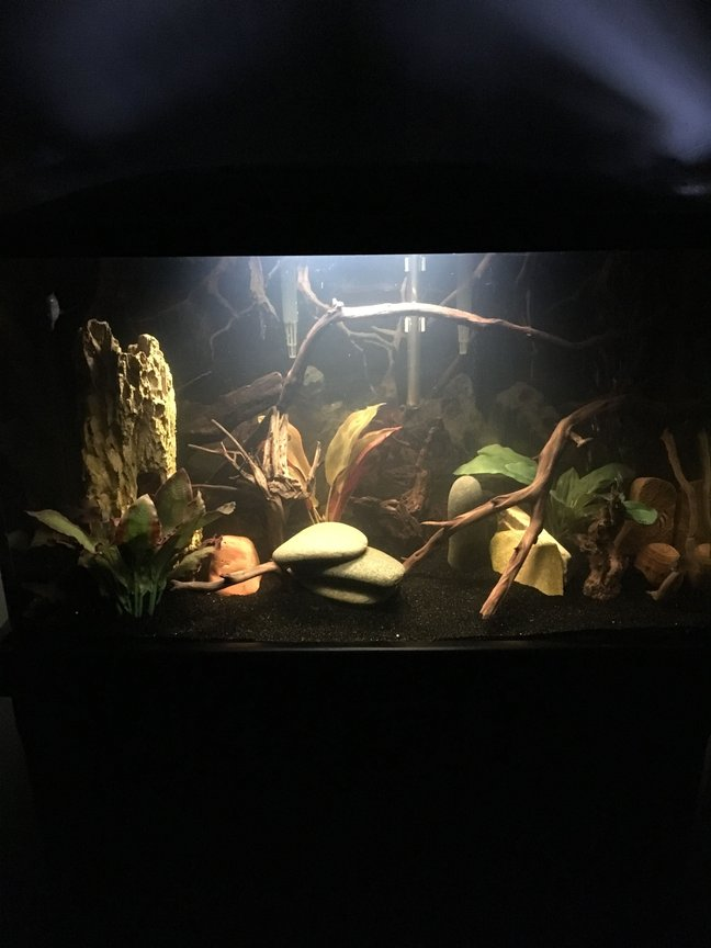 29 gallons freshwater fish tank (mostly fish and non-living decorations) - 29 gallon Bolivian ram tank