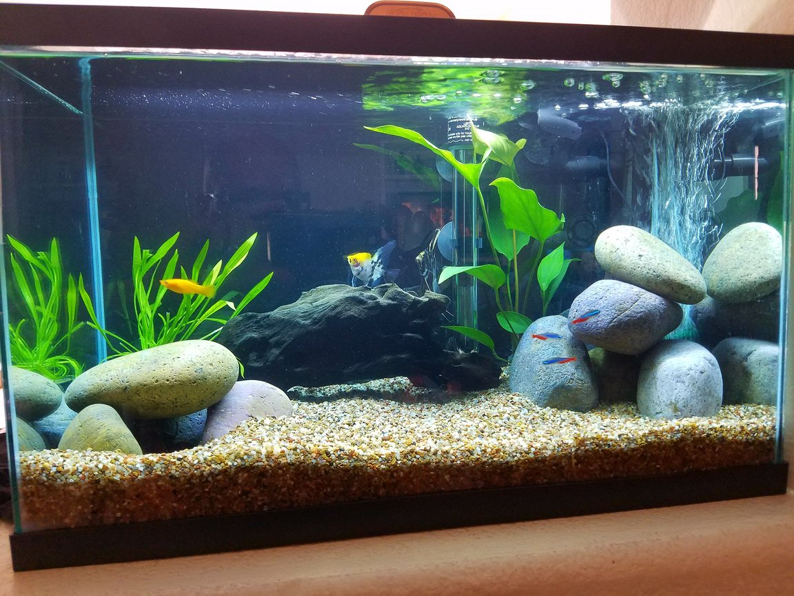 10 gallons freshwater fish tank (mostly fish and non-living decorations) - Wifey's tank