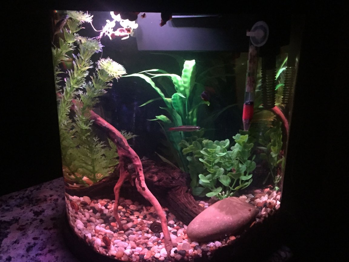 4 gallons freshwater fish tank (mostly fish and non-living decorations) - 3.5 freshwater Nano