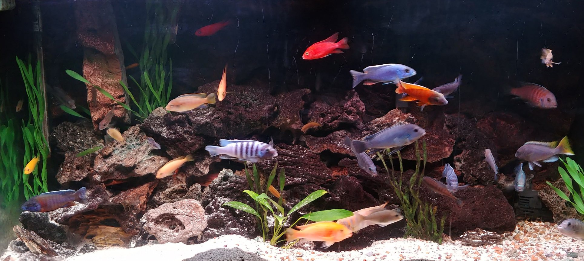 90 gallons freshwater fish tank (mostly fish and non-living decorations) - latest tank picture
