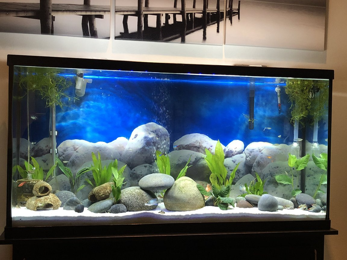 60 gallons freshwater fish tank (mostly fish and non-living decorations) - Low tech, minimalistic