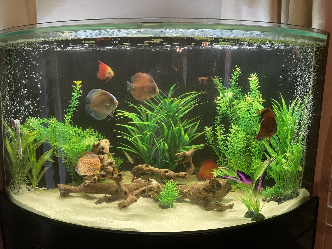 96 gallons freshwater fish tank (mostly fish and non-living decorations) - My first try at a tank