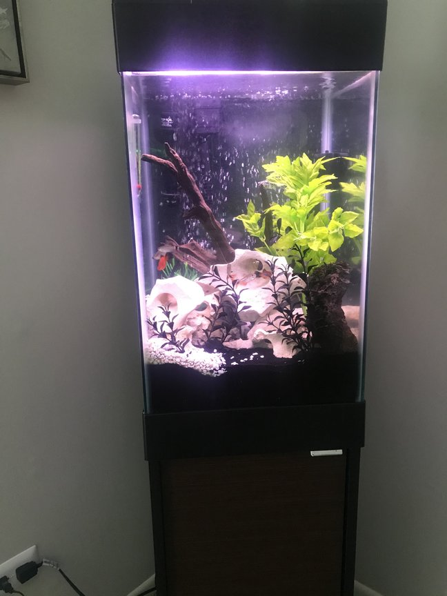 150 gallons freshwater fish tank (mostly fish and non-living decorations) - 15 gallon tall cube aquarium