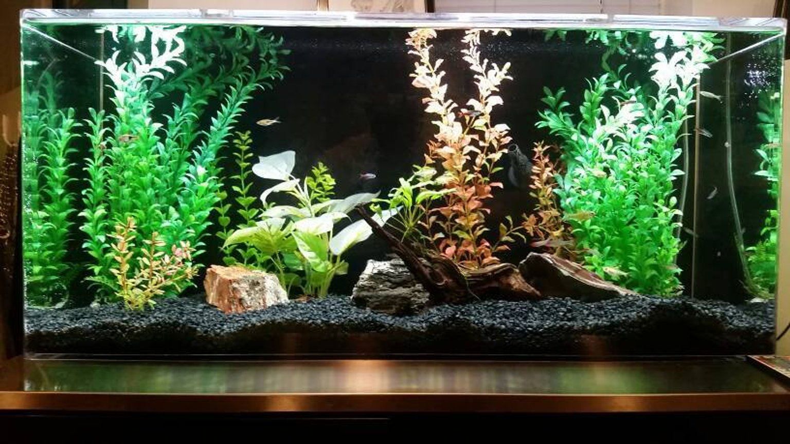 35 gallons freshwater fish tank (mostly fish and non-living decorations) - 35 Gallon acrylic.