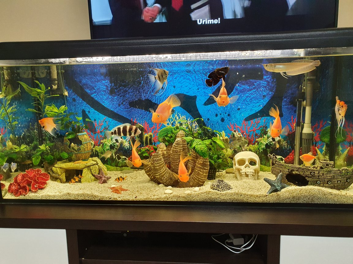 65 gallons freshwater fish tank (mostly fish and non-living decorations) - Rate my art!