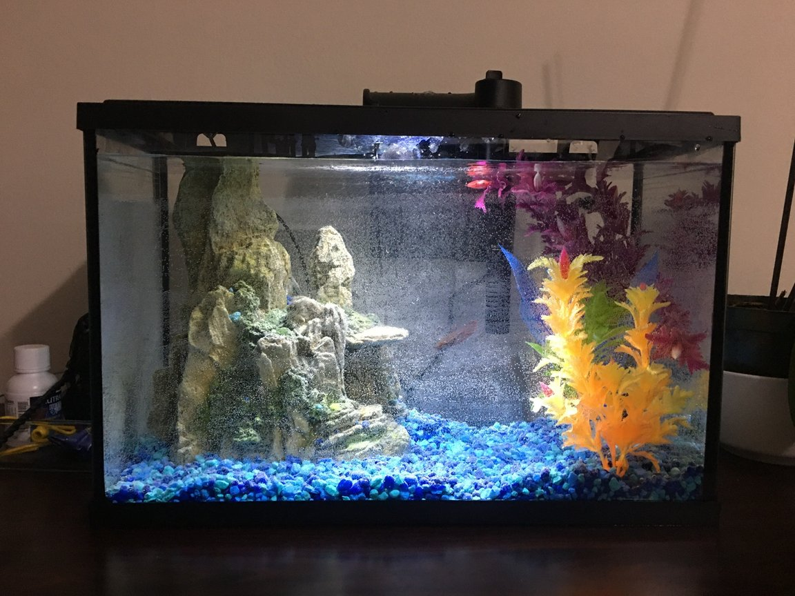 5 gallons freshwater fish tank (mostly fish and non-living decorations) - Betta sorority