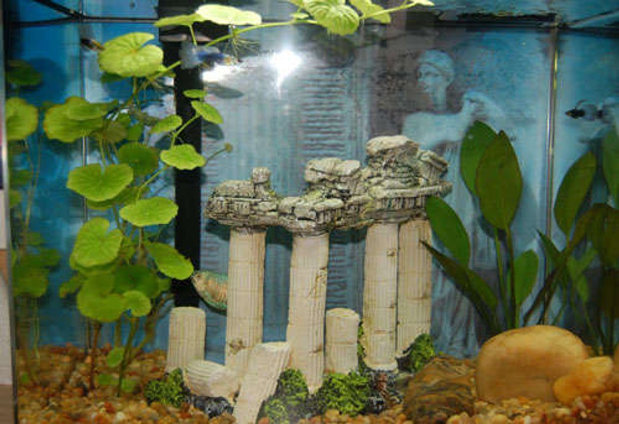 6 gallons freshwater fish tank (mostly fish and non-living decorations) - Welcome to the Parthenon