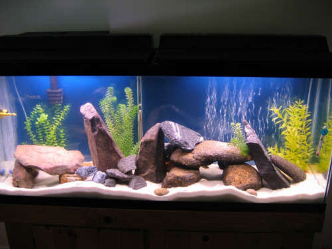 55 gallons freshwater fish tank (mostly fish and non-living decorations) - added some more river rocks