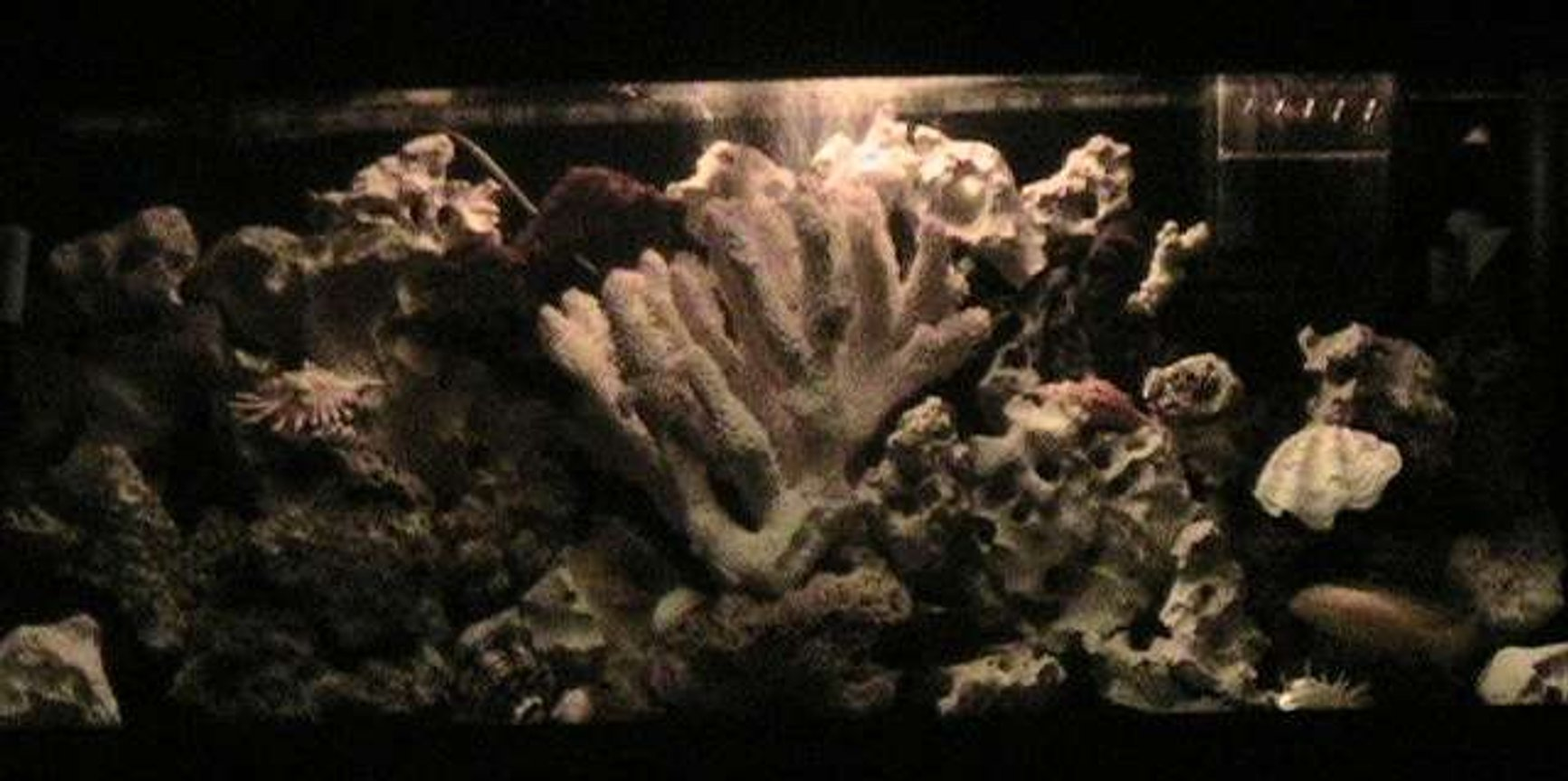 55 gallons freshwater fish tank (mostly fish and non-living decorations) - nite light pic