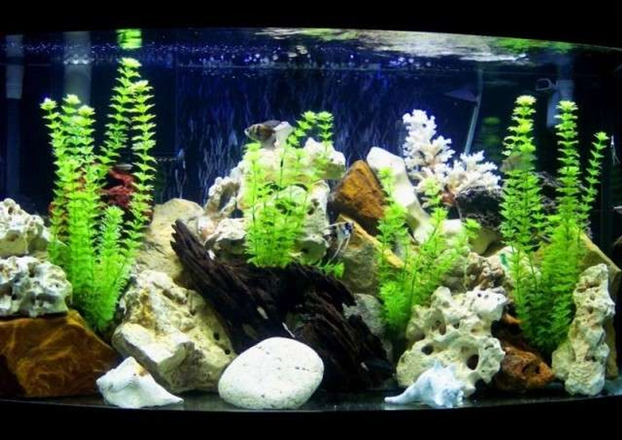 46 gallons freshwater fish tank (mostly fish and non-living decorations) - 46 gal. fresh w/ fake plants, Fluval 305 canister filter, and a wet/dry trickle filter. 4 angels, 4 white cloud danios, 2 black skirt tetras, and a plecostoums