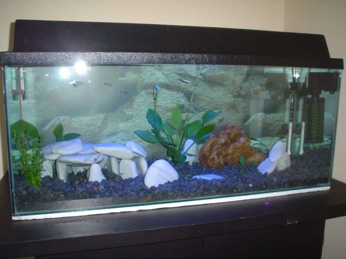 25 gallons freshwater fish tank (mostly fish and non-living decorations) - 30 gal