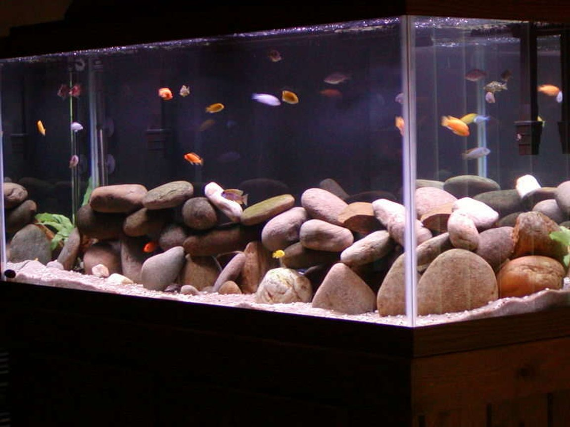 75 gallons freshwater fish tank (mostly fish and non-living decorations) - corner shot