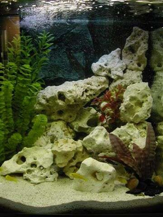 38 gallons freshwater fish tank (mostly fish and non-living decorations) - Malawi Cichlid Tank