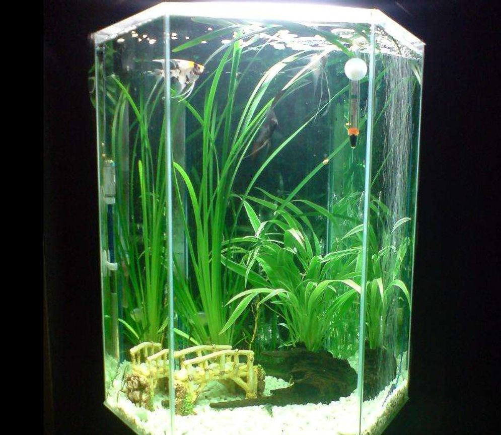 20 gallons freshwater fish tank (mostly fish and non-living decorations) - Tall Hex (Angelfish)