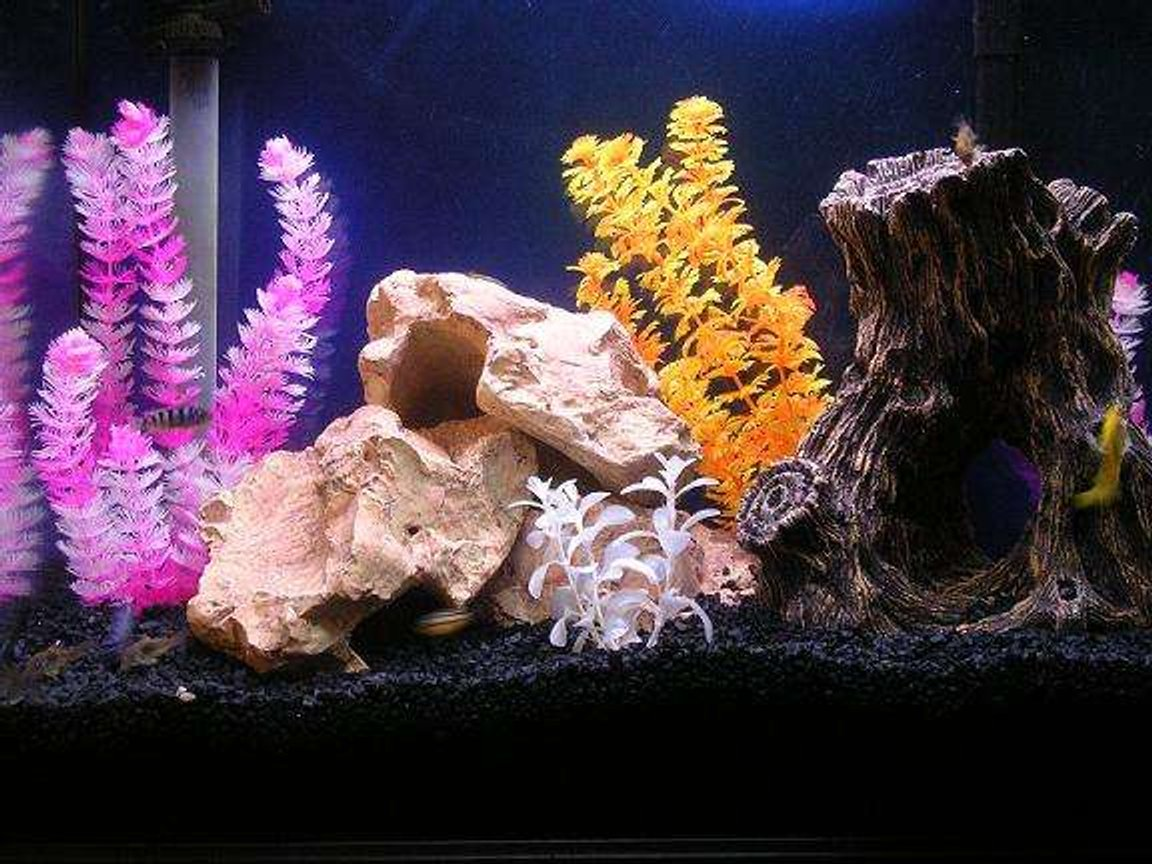 30 gallons freshwater fish tank (mostly fish and non-living decorations) - Lake Malawi Tank