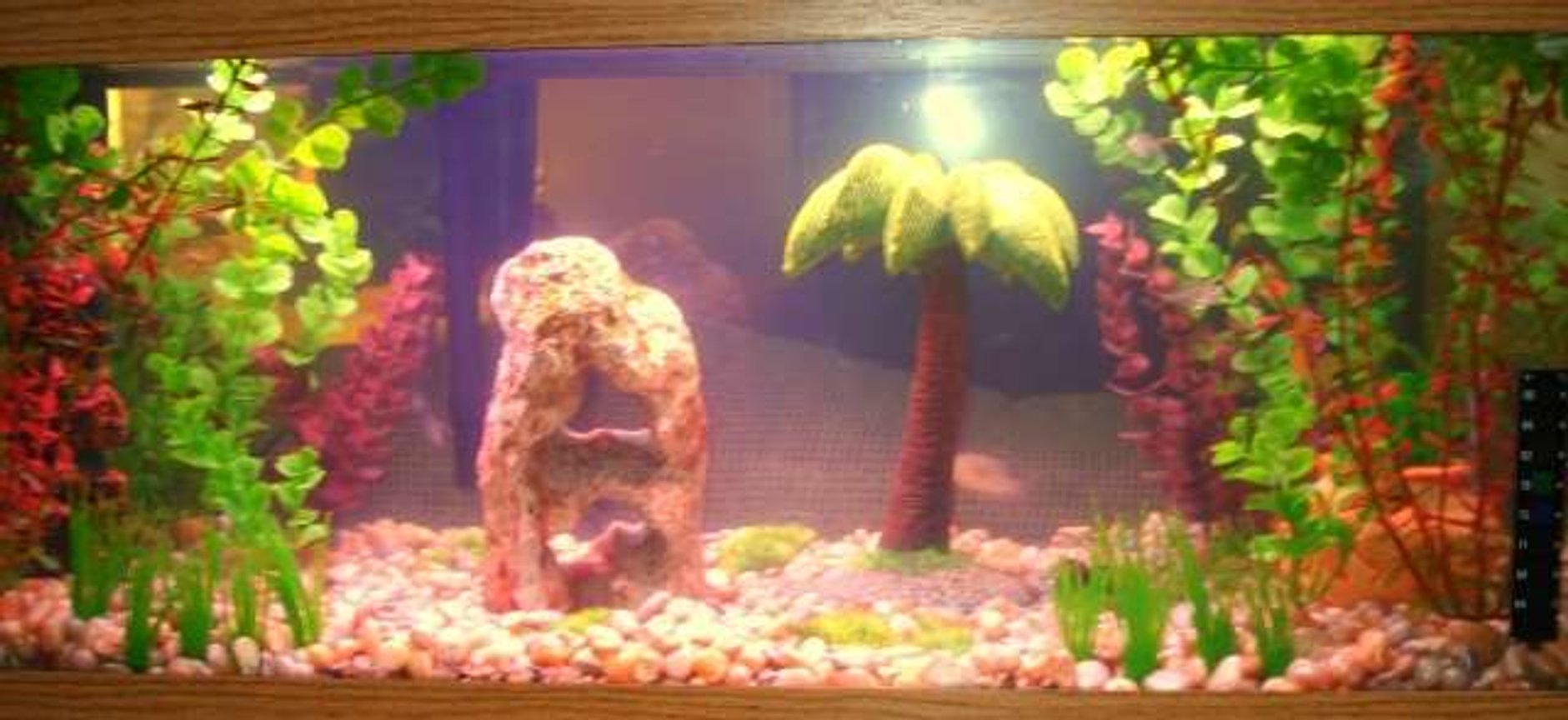 20 gallons freshwater fish tank (mostly fish and non-living decorations) - Fishies