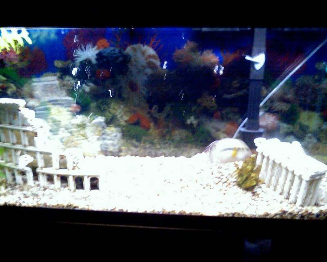 55 gallons freshwater fish tank (mostly fish and non-living decorations) - thisis my 55 gallon tank