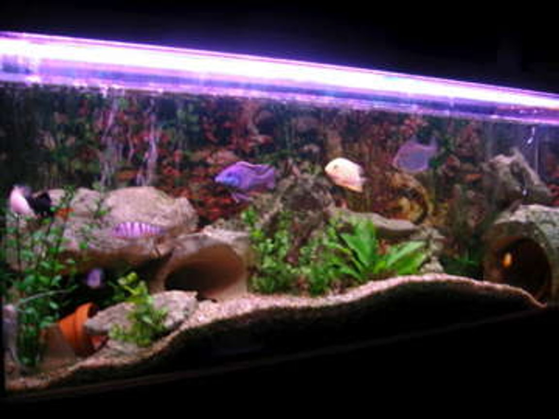 50 gallons freshwater fish tank (mostly fish and non-living decorations) - my tank now