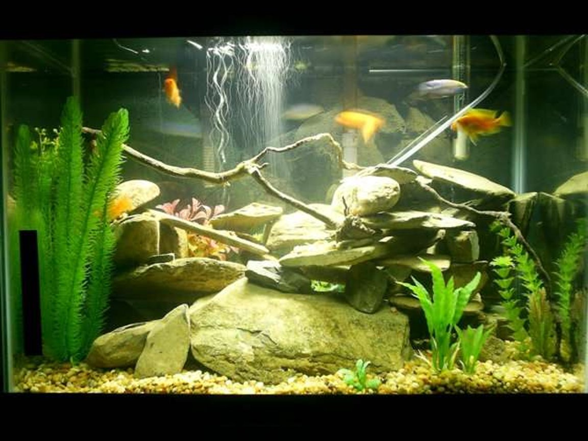 20 gallons freshwater fish tank (mostly fish and non-living decorations) - 20 gallon African Cichlid tank