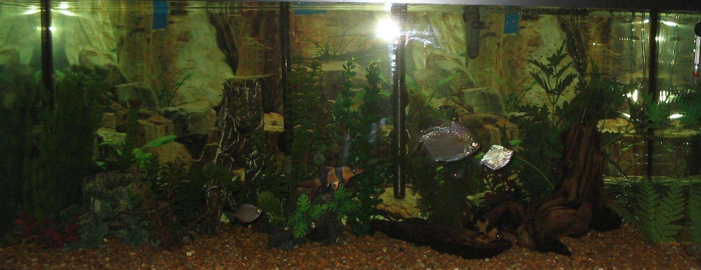 75 gallons freshwater fish tank (mostly fish and non-living decorations) - My Pride and Joy 75 Gallon, Cant get a good pictuer without reflection.