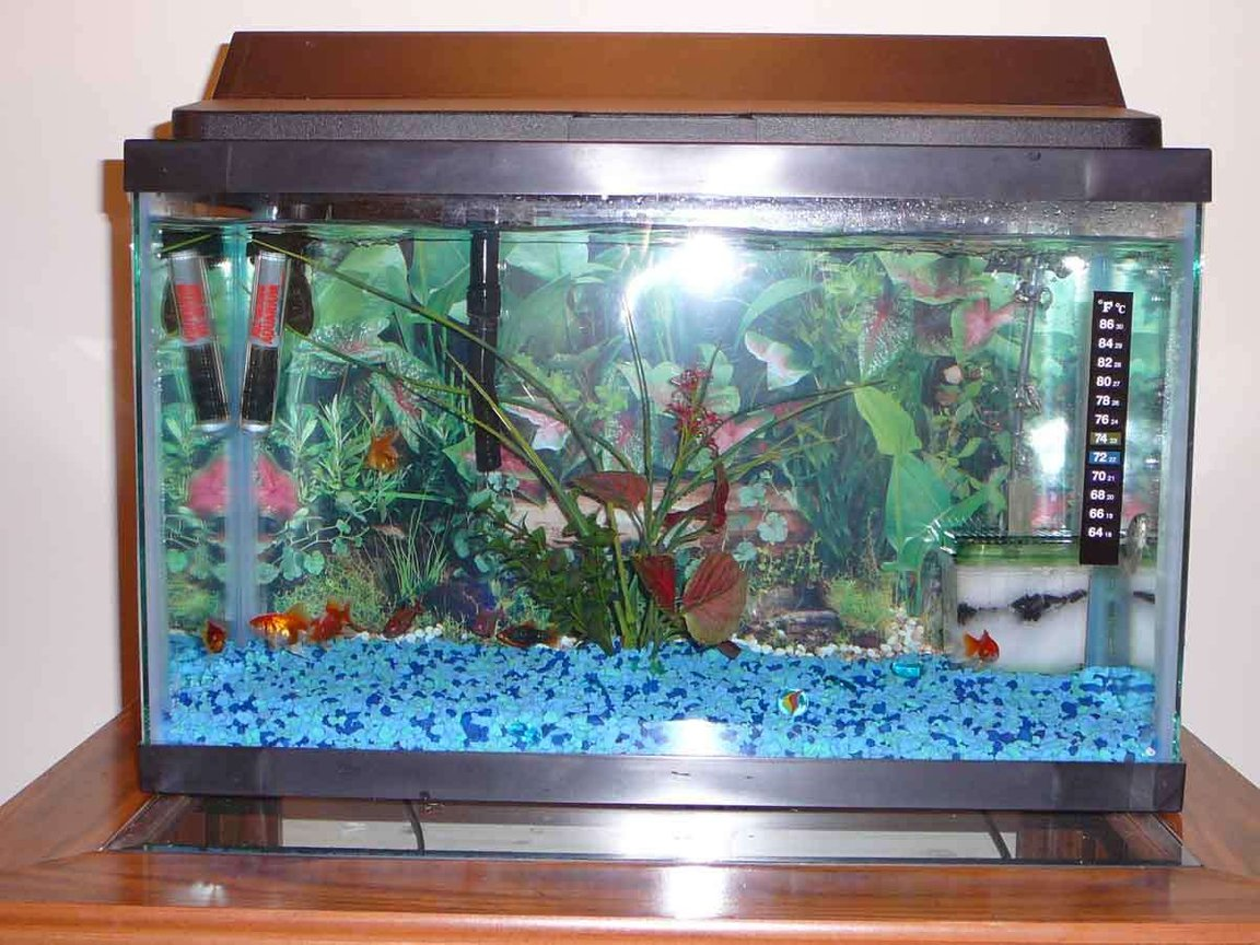 10 gallons freshwater fish tank (mostly fish and non-living decorations) - MY tank :P