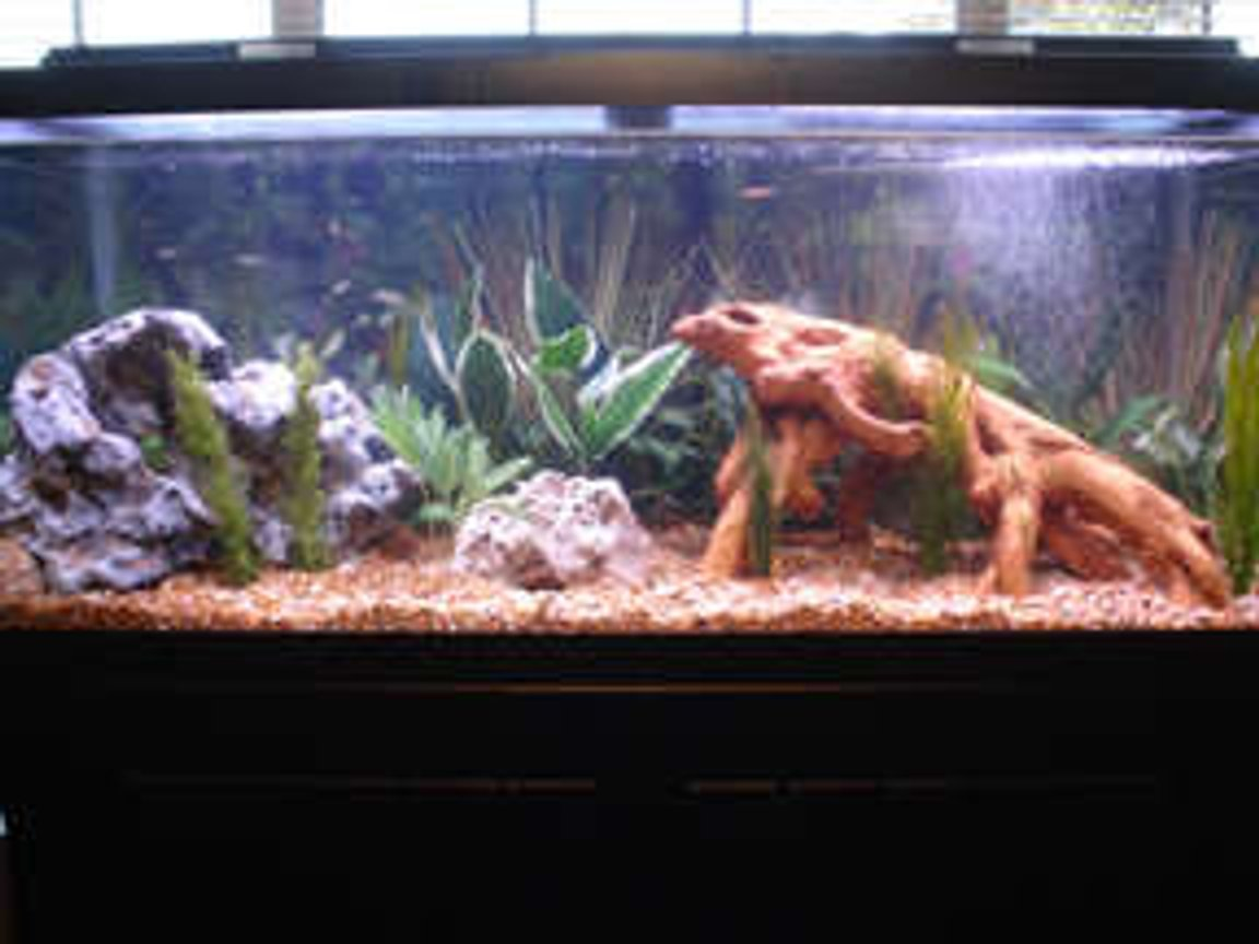 75 gallons freshwater fish tank (mostly fish and non-living decorations) - Full Tank Pic