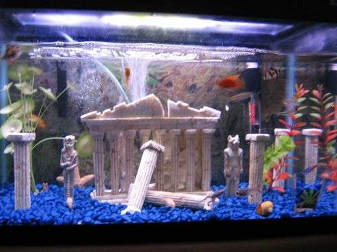 10 gallons freshwater fish tank (mostly fish and non-living decorations) - HOT tank