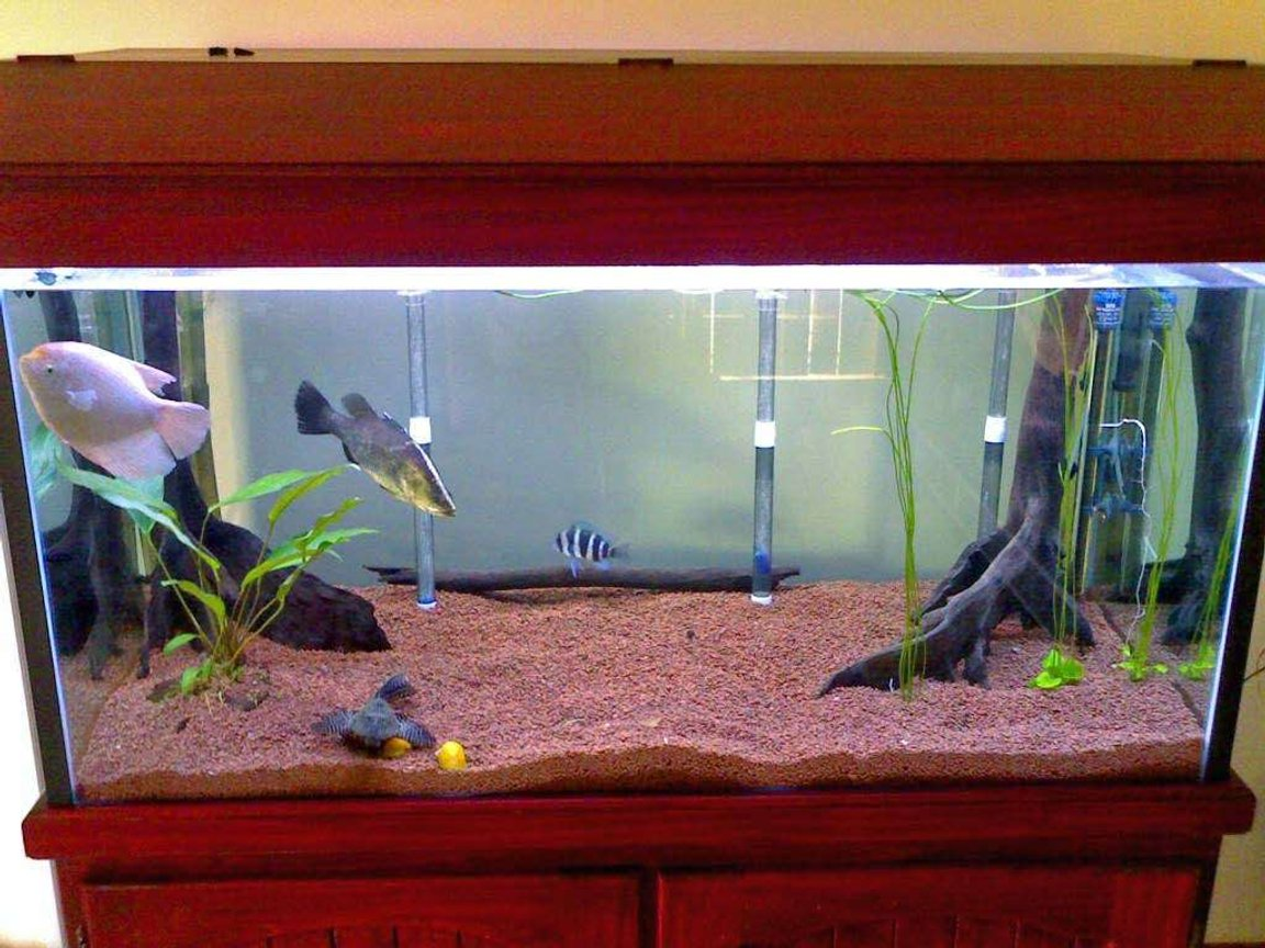 freshwater fish tank (mostly fish and non-living decorations) - a