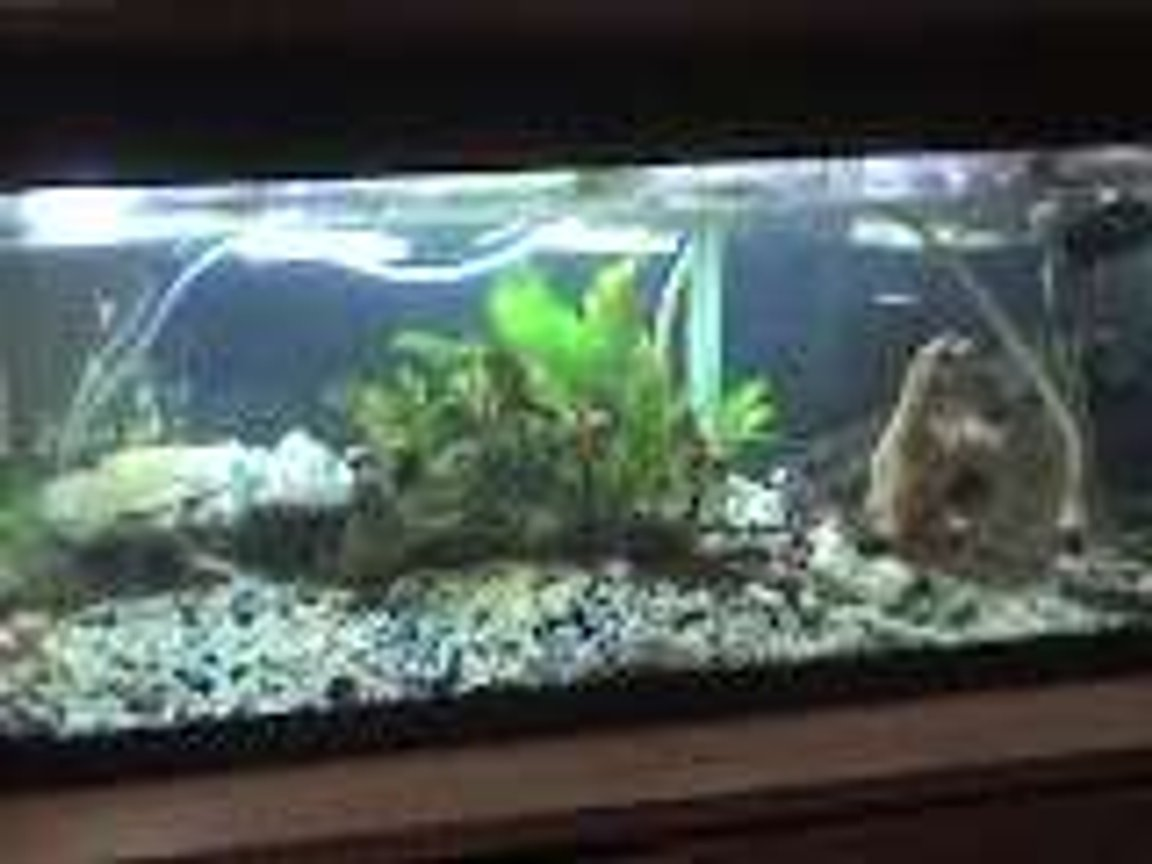 freshwater fish tank (mostly fish and non-living decorations) - t