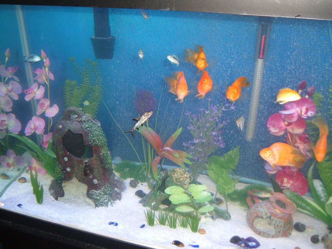 90 gallons freshwater fish tank (mostly fish and non-living decorations) - Another shot.