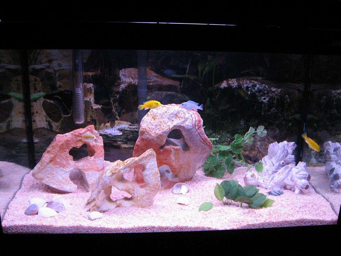 20 gallons freshwater fish tank (mostly fish and non-living decorations) - FIRST SMALL CICHLID TANK